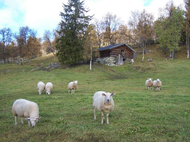 SMIL-midler 2017 Os kommune i Hedmark
