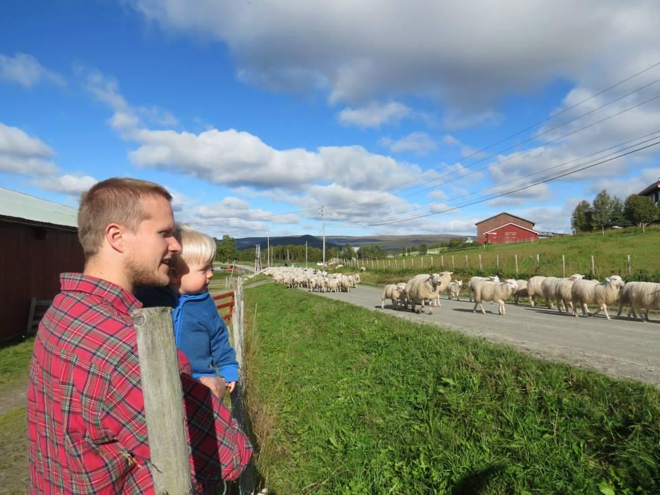 nyheter_fra_landbruksavdelingen_os_kommune