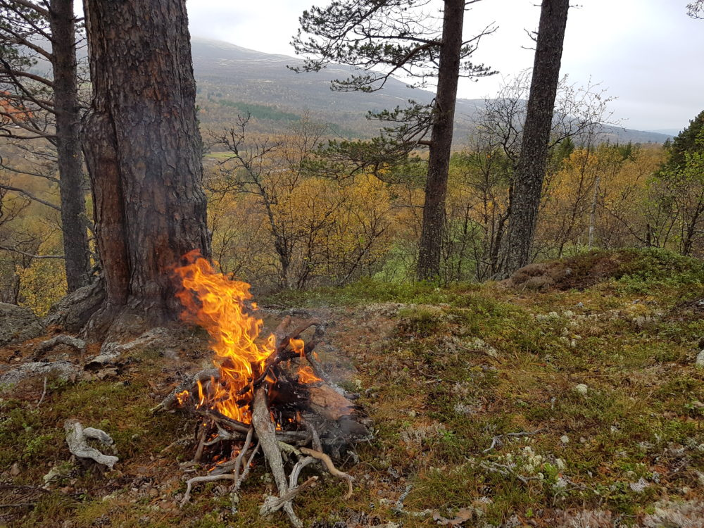 ledig_stilling_som_skogbrukskonsulent_i_os_kommune