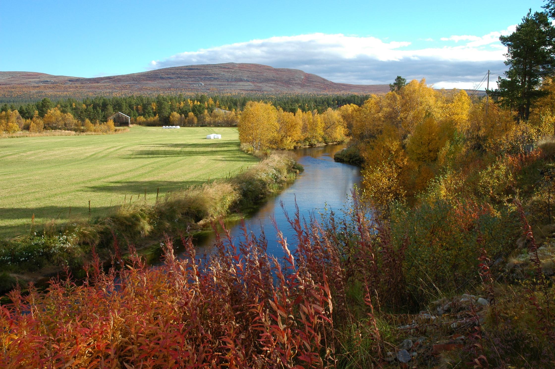 Vegetasjon i Os kommune