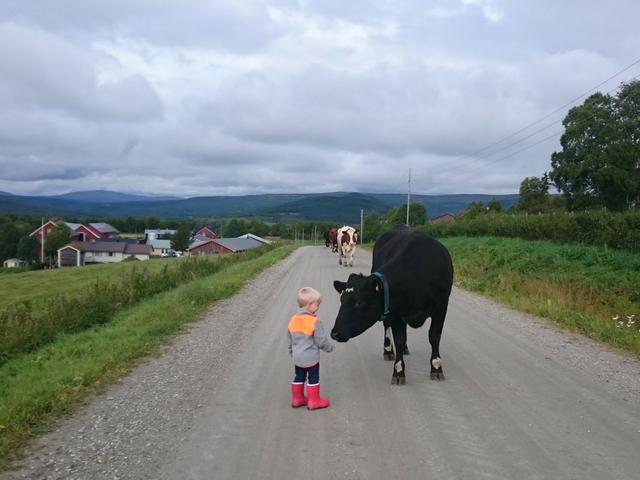 Beredskapsplan for alle aktive gårdsbruk i Os kommune