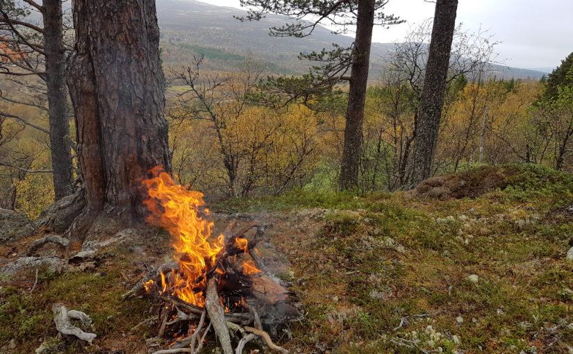 100% fast stilling som skogbrukskonsulent