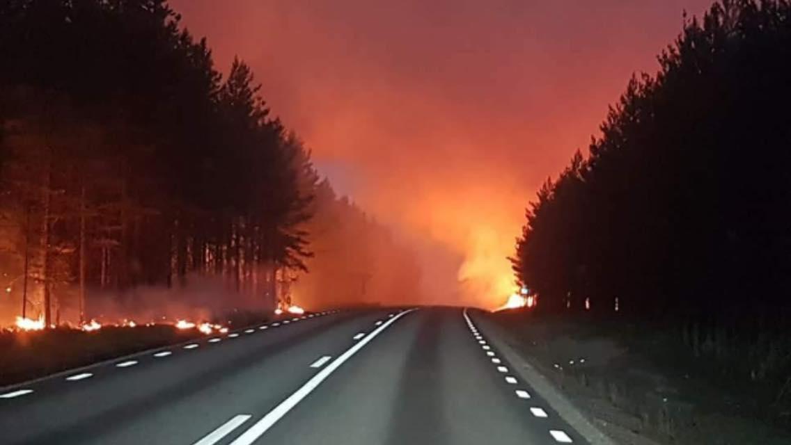 Illustrasjonsfoto skogbrann Svergie