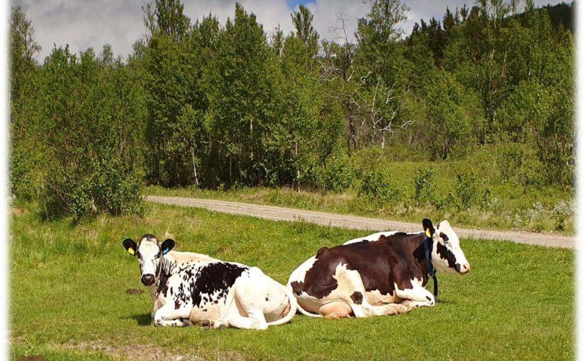 Landbruksnytt – Nr. 2 – juli 2019
