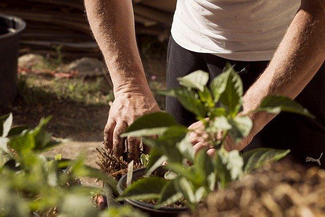 Bilde av noen som planter