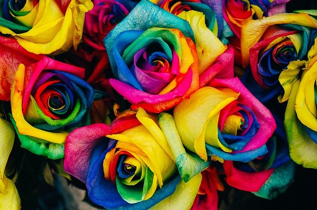 Roser i regnbuens farger